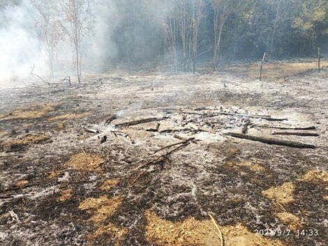 Bosco incendiato